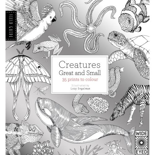 FIELD GUIDE: CREATURES GREAT & SMALL COLOURING