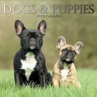 Dogs & Puppies 2019 Calendar