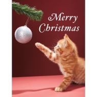 Christmas Kitty Boxed Holiday Full Notecards